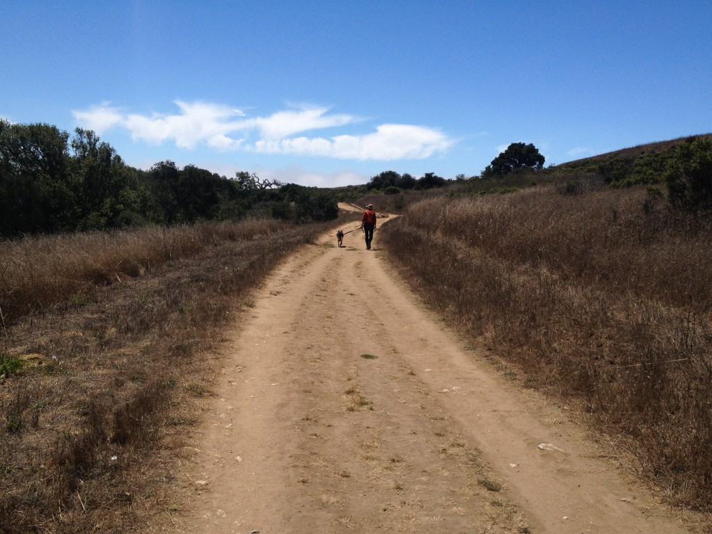 Deirdre and her dog Sadie walking in Pogonip at UCSC campus.