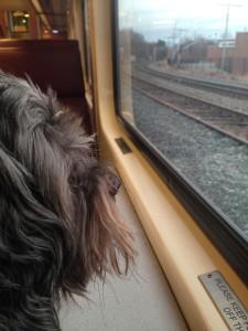 Ramone on train