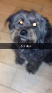 Snapchat my dog